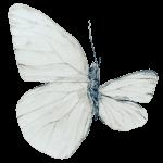 mariposa con un ala rota dibujo terapeutico